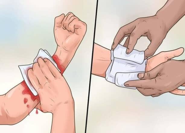 trường sinh thảo có tác dụng cầm máu