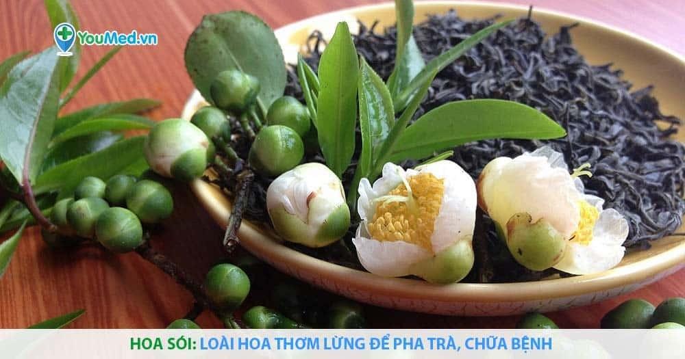 Hoa sói: Loài hoa thơm lừng để pha trà, chữa bệnh
