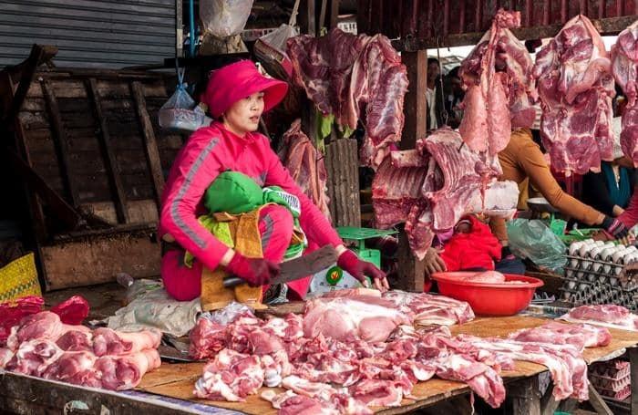 Bệnh dịch tả lợn Châu Phi: những dấu hiệu bệnh cần chú ý 2