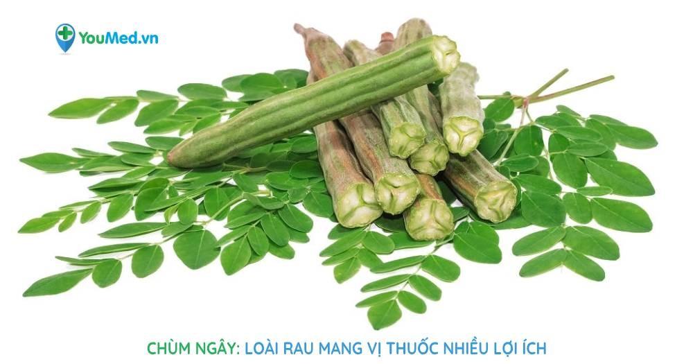 Chùm ngây: Loài rau mang vị thuốc nhiều lợi ích