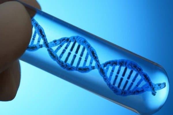 Công dụng của tinh trùng trong di truyền các tính trạng cơ thể