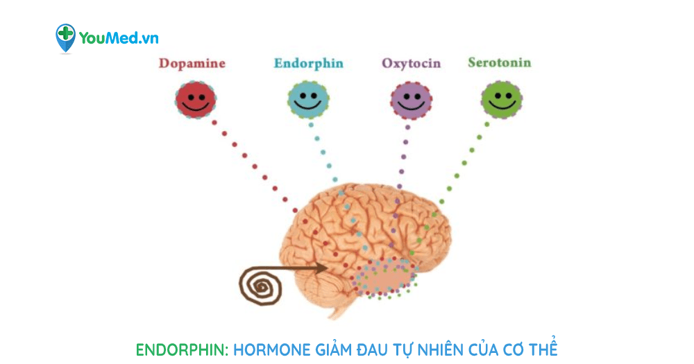 Endorphin: hormone giảm đau tự nhiên của cơ thể