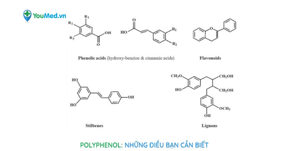 Bạn biết gì về Polyphenol?
