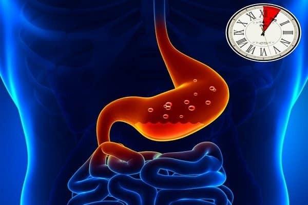 Chức năng của dạ dày là tiêu hóa thức ăn - nóng rát bao tử