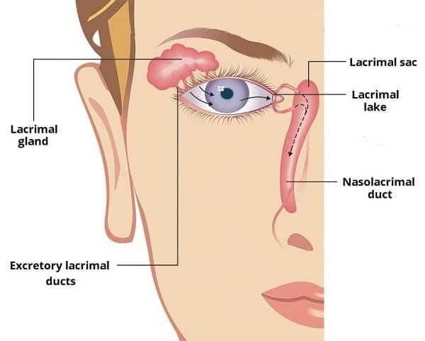 Tuyến nước mắt - tuyến lệ