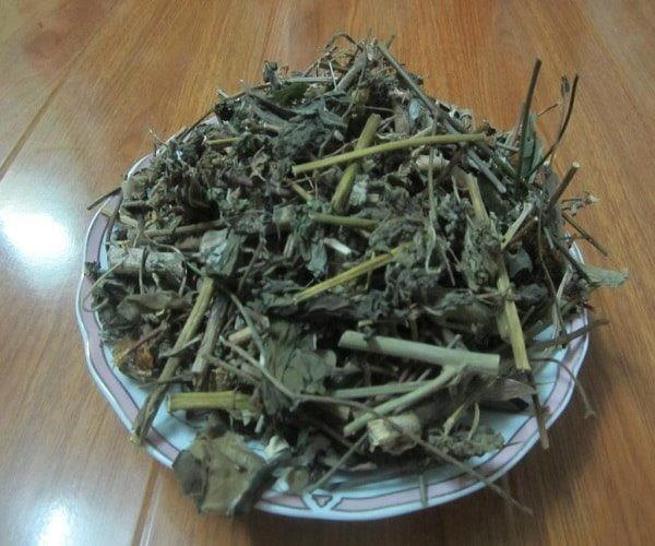Lá và rễ Bạch đồng nữ phơi khô làm thuốc