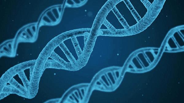 Đột biến gen của bệnh cơ tim phì đại mang tính trạng trội