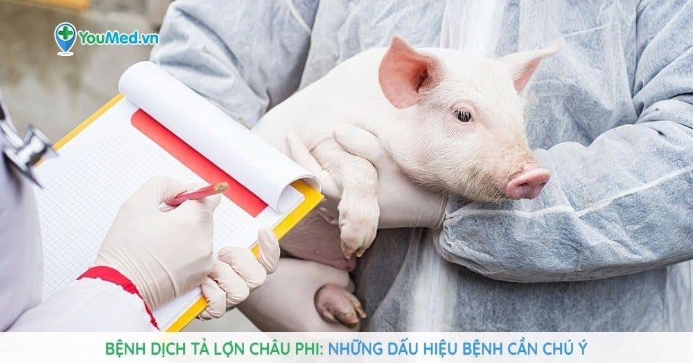 Bệnh dịch tả lợn Châu Phi: những dấu hiệu bệnh cần chú ý