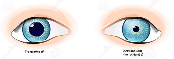 Bên trái: Mắt trong điều kiện thiếu ánh sáng. Bên phải: Mắt trong điều kiện nhiều ánh sáng.