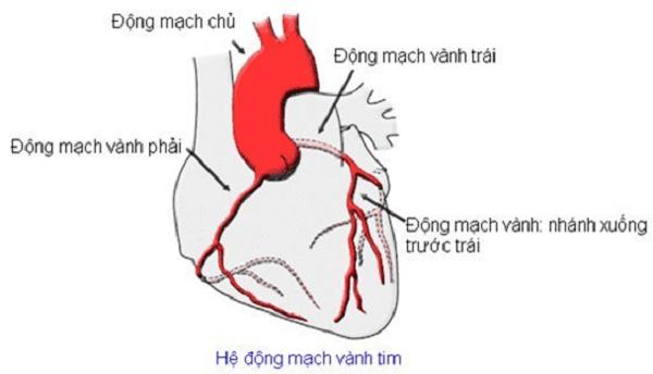 Hệ thống động mạch vành