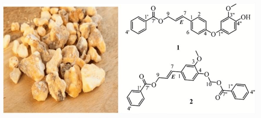 2 hoạt chất mới được phân lập từ nhựa Cánh kiến trắng
