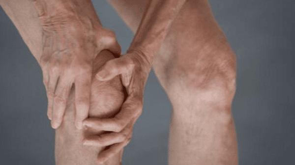 Hoa Dẻ có tác dụng trị tê thấp, đau nhức gân xương