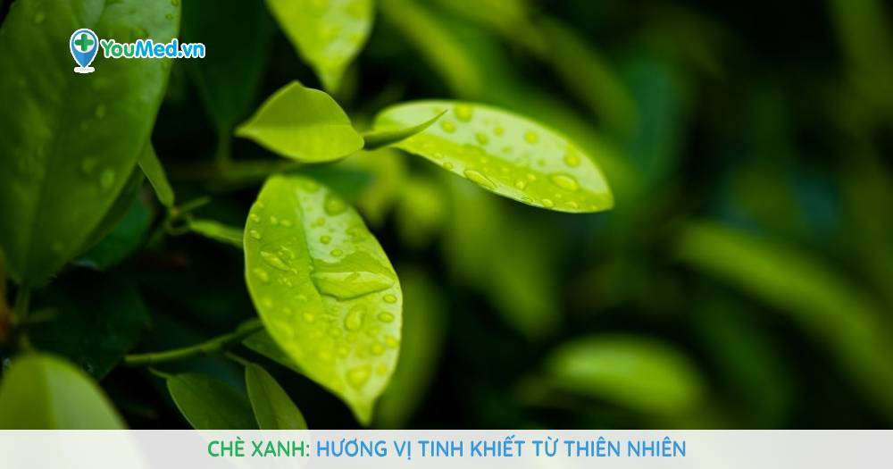 Chè xanh: Hương vị tinh khiết từ thiên nhiên