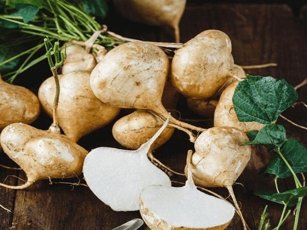 Phần rễ phình thành củ chính là bộ phận thường được dùng làm món ăn - vị thuốc