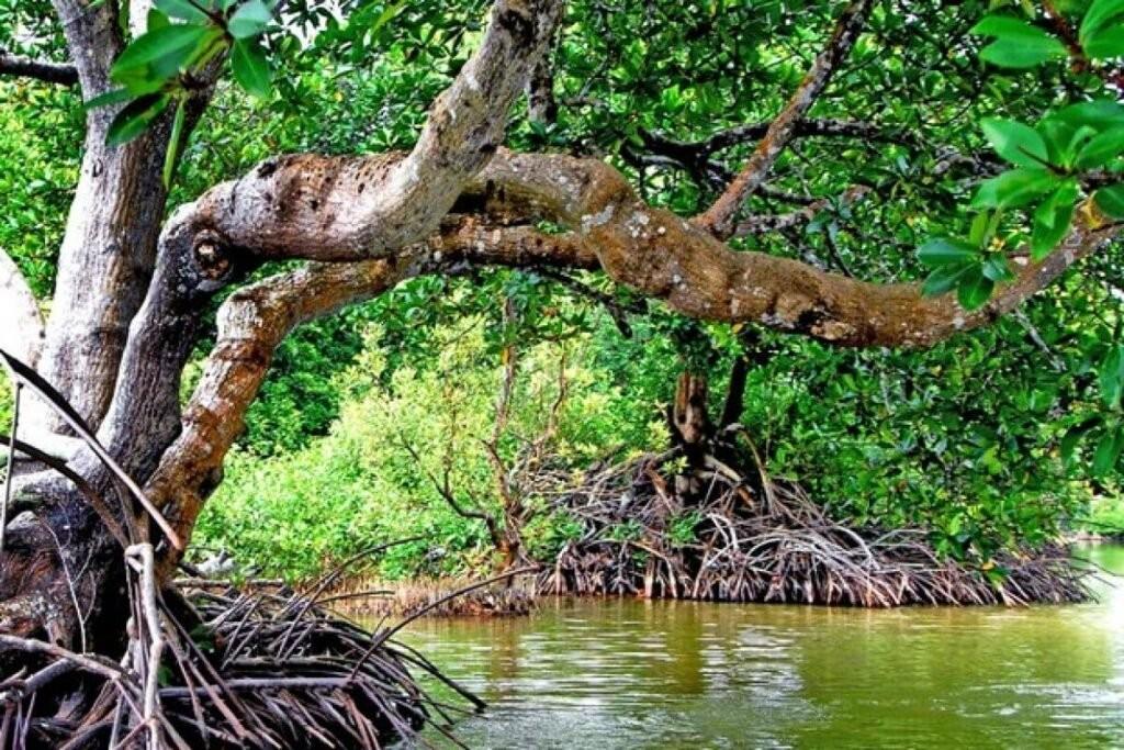 Đước cùng với một số loài thực vật khác ở ven biển đã tạo nên một hệ sinh thái đặc biệt gọi là hệ sinh thái rừng ngập mặn nhiệt đới