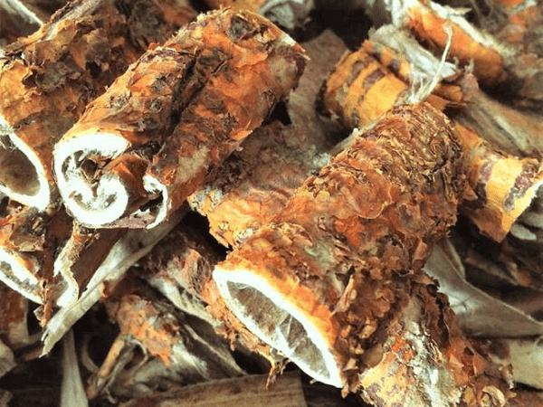 Vị thuốc Tang bạch bì (Vỏ rễ Dâu tằm)
