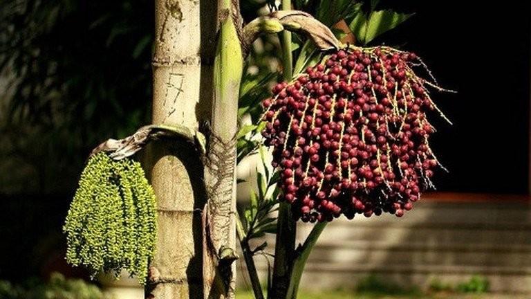 Hoa và quả