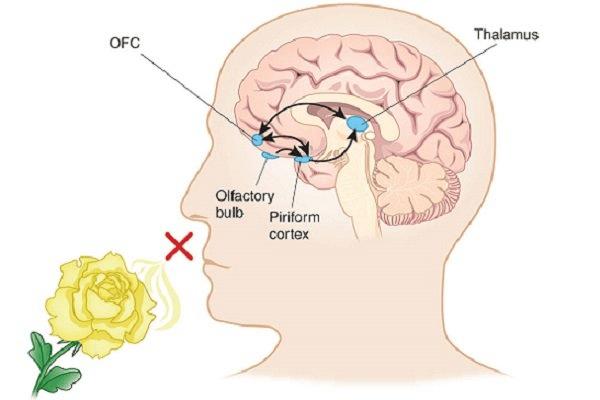 Chức năng khứu giác của mũi