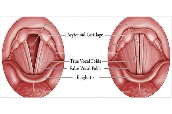 Các dây thanh âm có vai trò phát âm