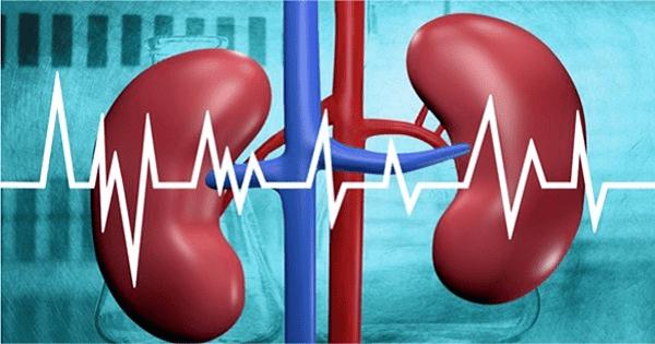 Các động mạch thận là gì?