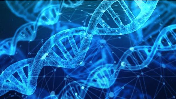 Hội chứng Klinefelter là một bệnh lí di truyền