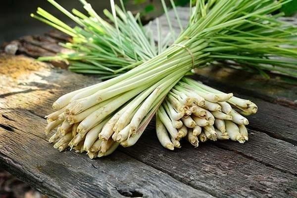 Thân và lá Sả được sử dụng rất nhiều để làm gia vị và chữa bệnh