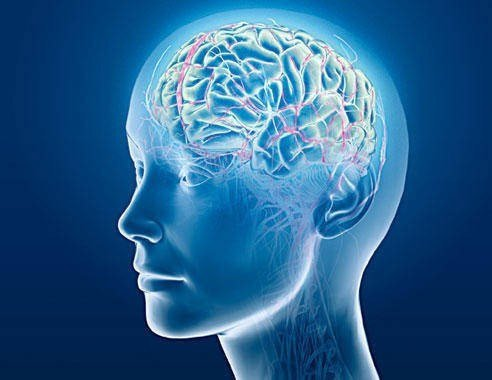 Thiên ma có tác dụng cải thiện trí nhớ, bảo vệ thần kinh