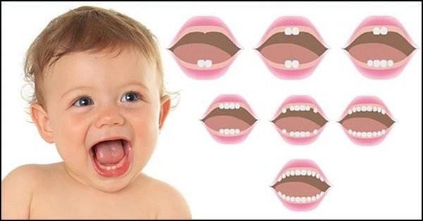 trình tự mọc răng sữa