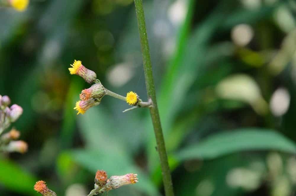 Hoa có màu vàng nhạt
