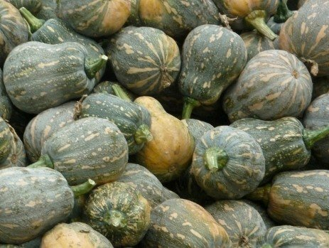 Bí đỏ hạt đậu