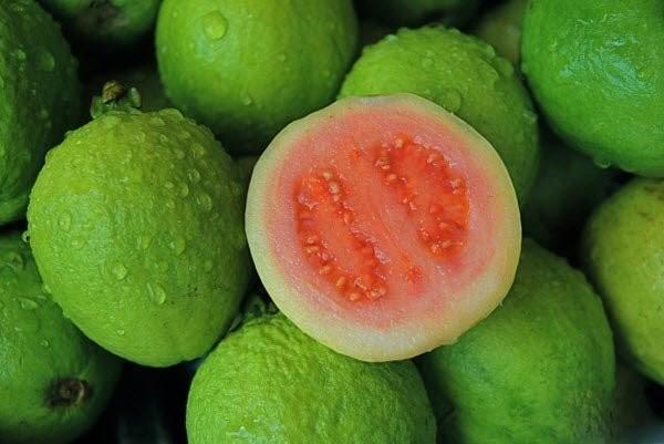Ổi có nguồn gốc từ Trung Mỹ hoặc miền Nam Mexico