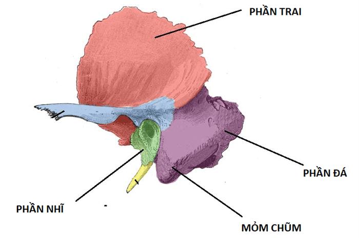 Các phần của xương thái dương