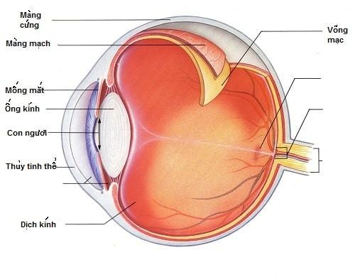 Hình ảnh cấu tạo của mắt