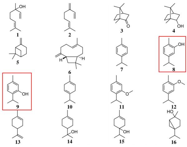Công thức hóa học của các chất trong tinh dầu cỏ xạ hương. Thymol (số 9) và carvacrol (số 8) là 2 chất có tác dụng mạnh nhất