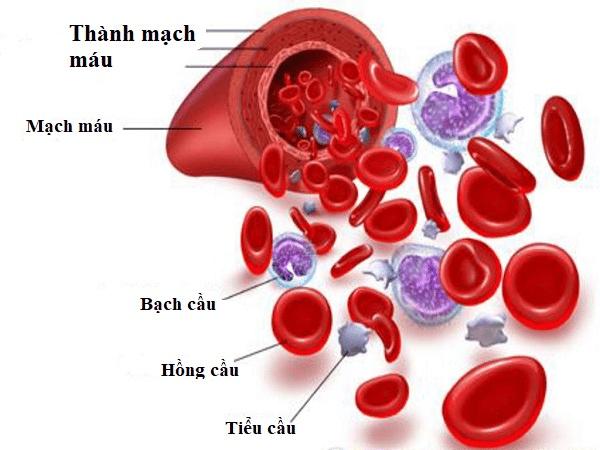 Các thành phần của huyết cầu bao gồm: Hồng cầu, bạch cầu, tiểu cầu