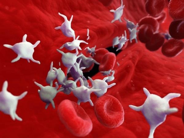 Tiểu cầu là những tế bào nhỏ được sinh ra trong tủy xương đi vào máu