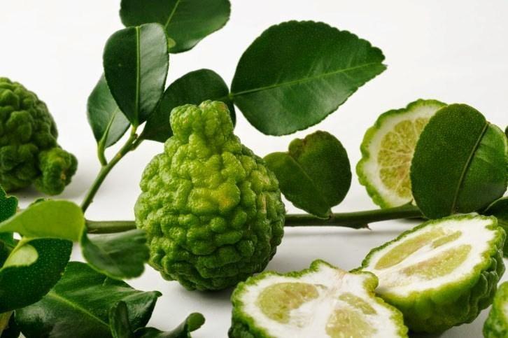 Chúc là loài cây đặc hữu ở An Giang