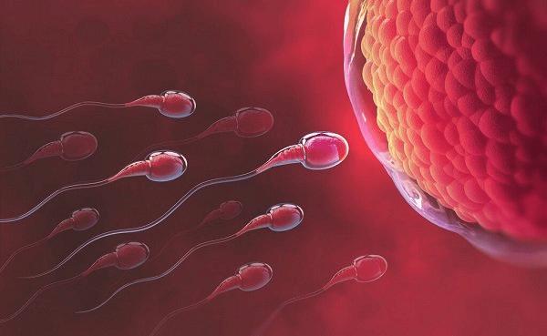 Thời gian rụng trứng là thời điểm tốt nhất để tinh trùng và trứng gặp nhau để thụ thai