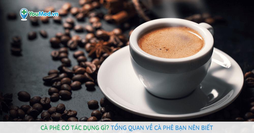 Cà phê có tác dụng gì? Tổng quan về cà phê bạn nên biết
