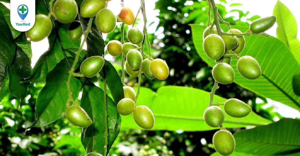 Hồng bì: Tác dụng trị bệnh không ngờ từ loài cây quen thuộc