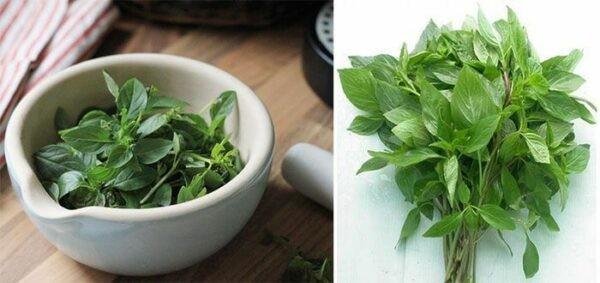 Húng quế là gia vị quen thuộc trong ẩm thực của người Việt Nam.