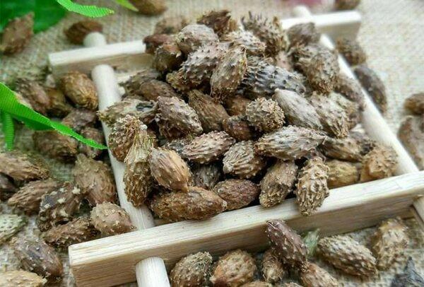 Quá ké (Thương nhĩ tử) là bộ phận thường được dùng để làm thuốc.