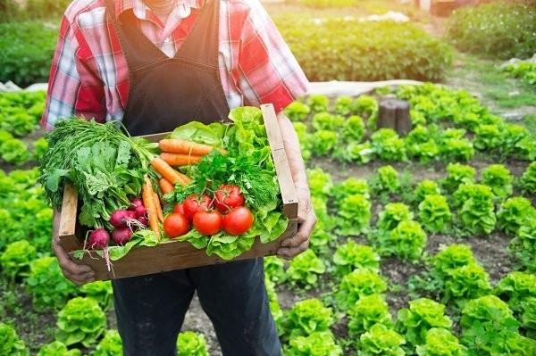 Thực phẩm hữu cơ có nồng độ hóa chất thấp và ít vi khuẩn thường trú