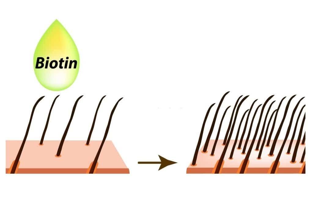 Biotin kích thích mọc tóc