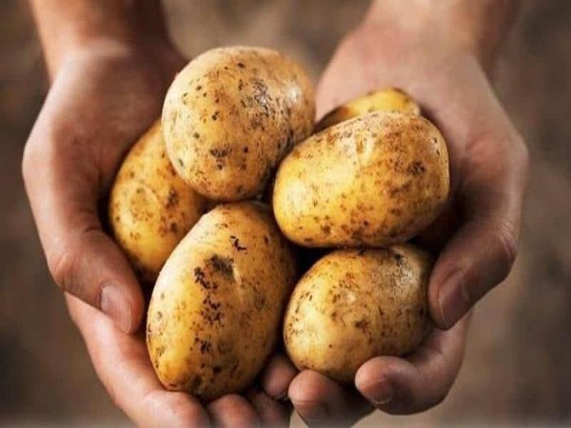 Khoai tây là loại rau củ cung cấp cho cơ thể