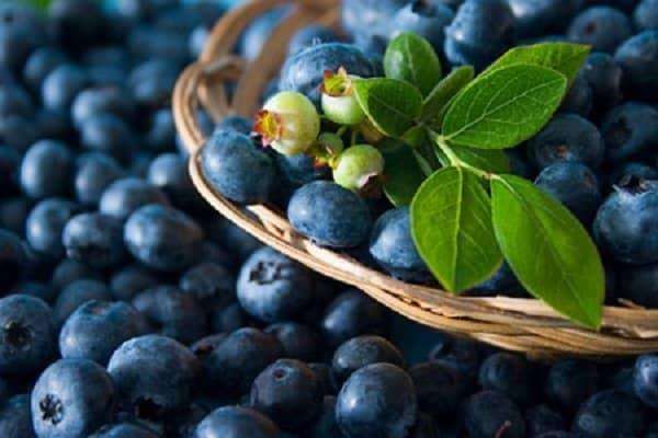 Quả việt quất là thực phẩm tốt cho hệ thần kinh