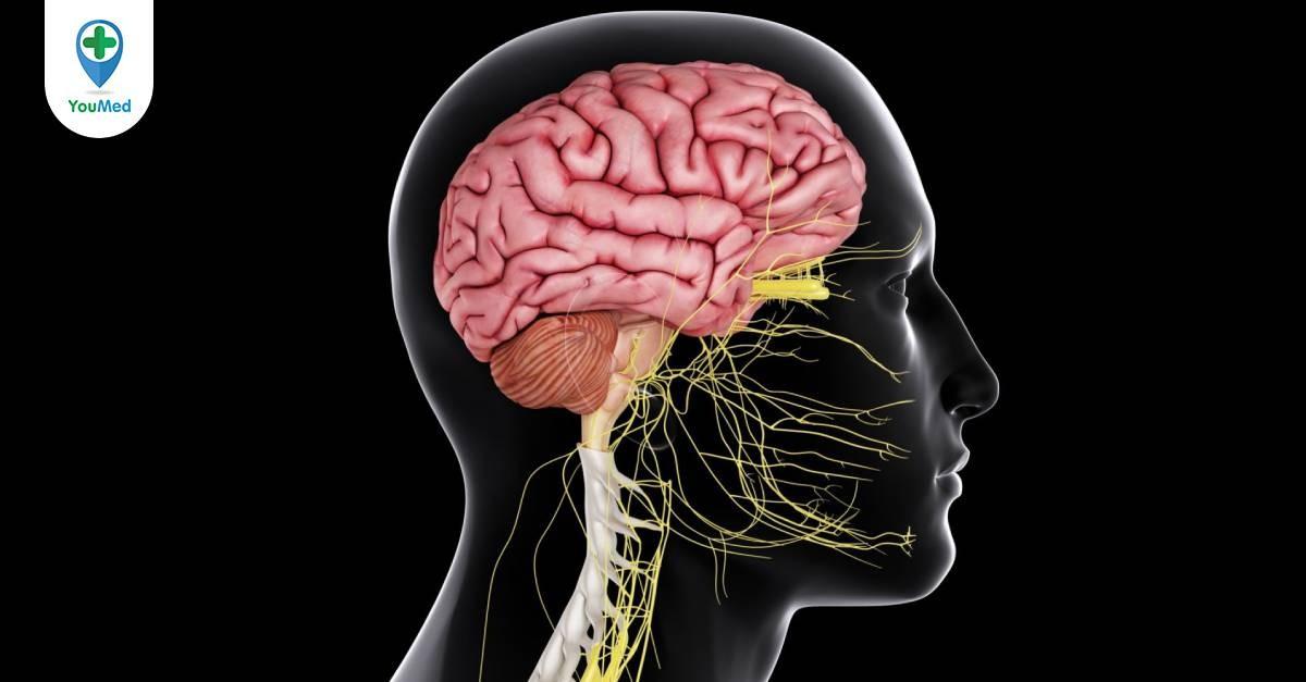 Khi nào cần uống thuốc bổ não? Top 6 thuốc bổ não được Bác sĩ khuyên dùng