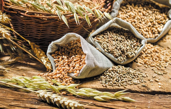 Ngũ cốc nguyên hạt giúp hỗ trợ quá trình giảm cân hiệu quả