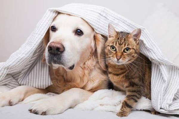 phác đồ điều trị sán chó