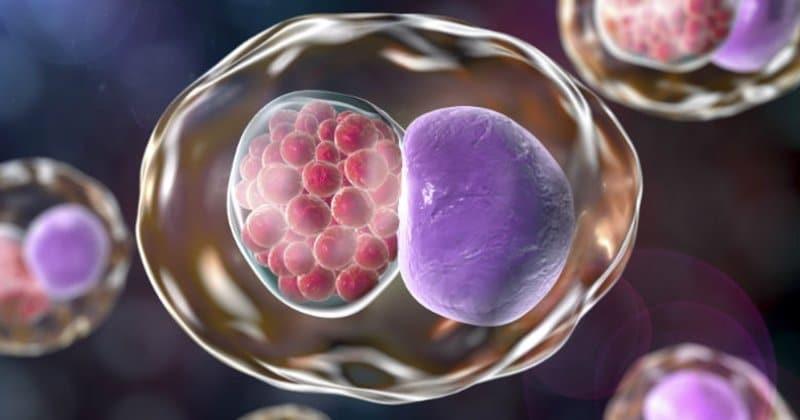 tinh trùng ít được hỗ trợ sinh sản